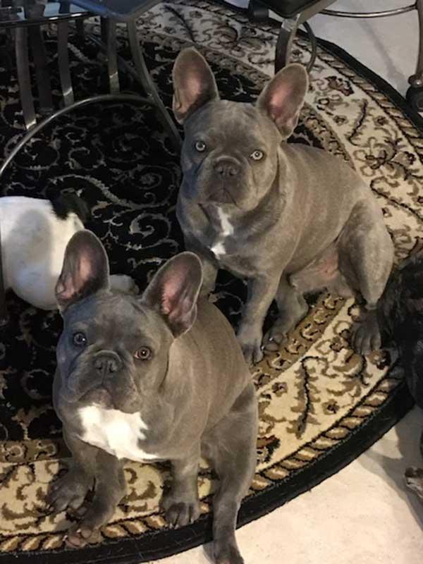 Quad-Carrying-Lilac-Twins