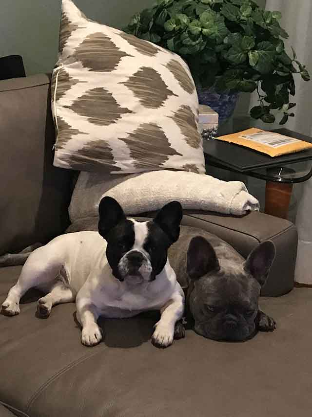Munchkin and Tucker by the couch