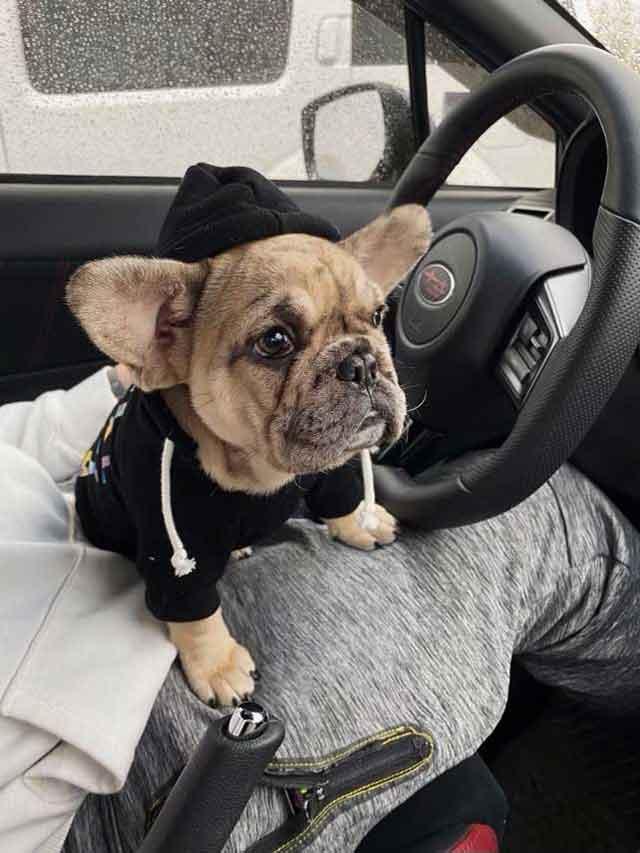 Abbey-&-Deisel-puppy-in-car